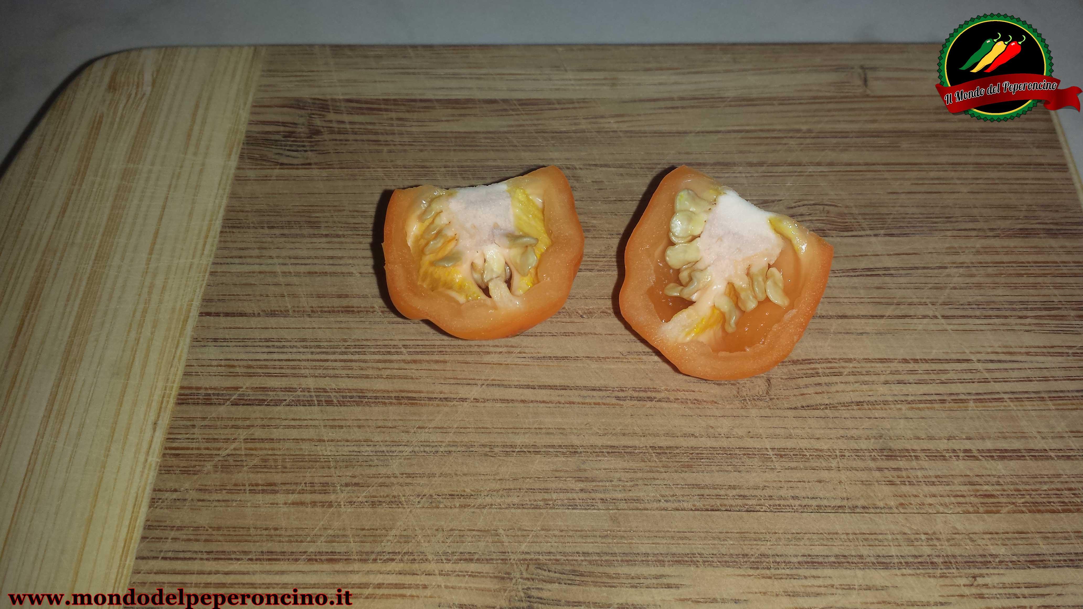 conservare-semi-peperoncino-3