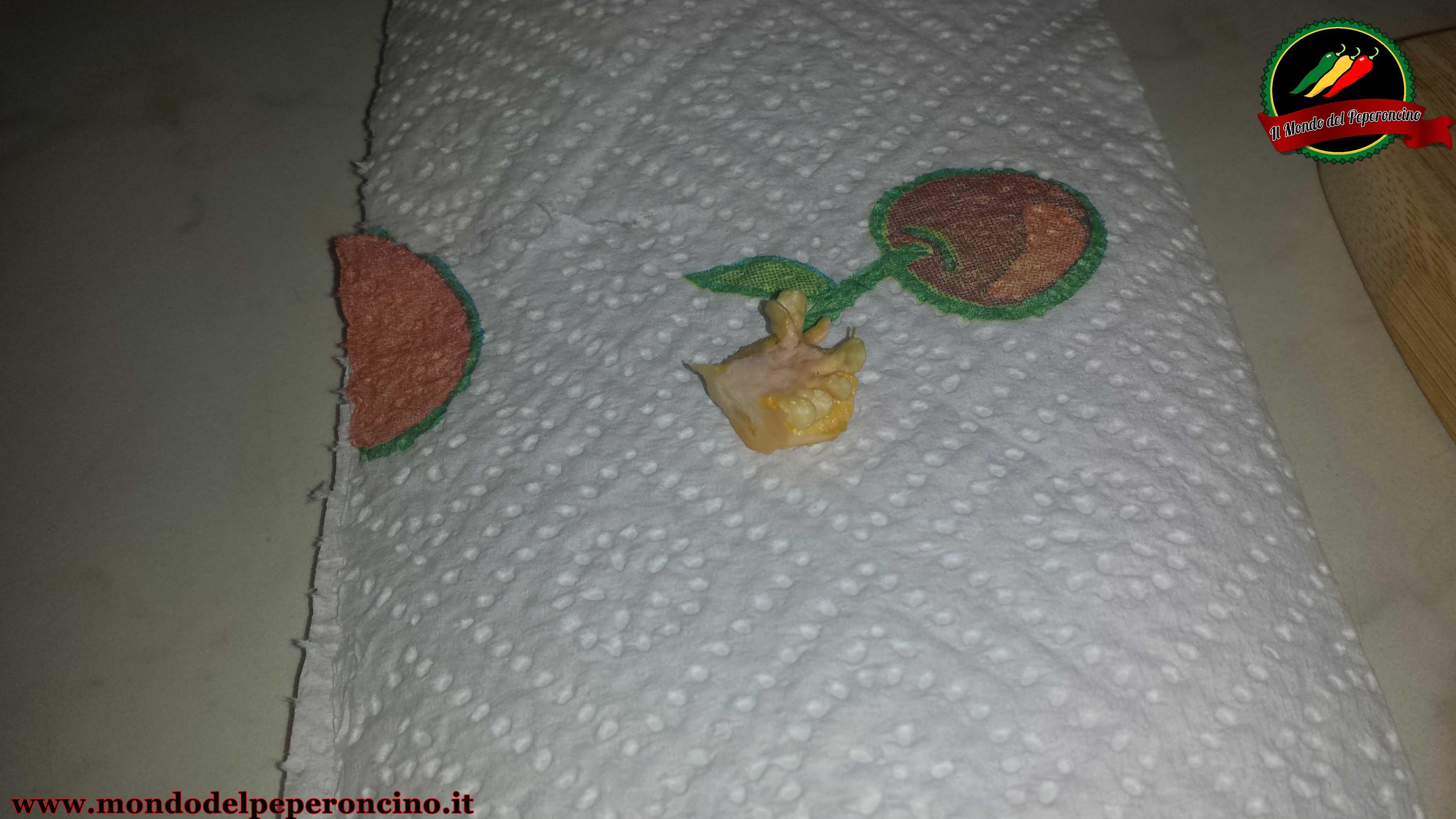 conservare-semi-peperoncino-5