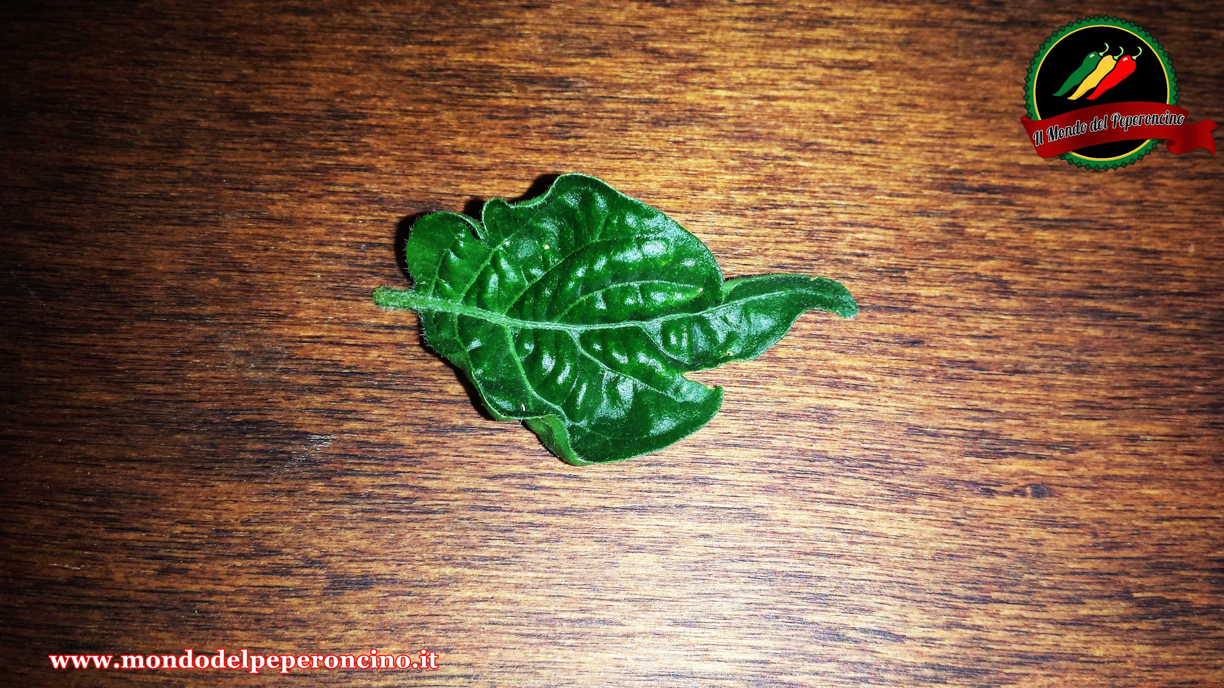 foglie-arricciate