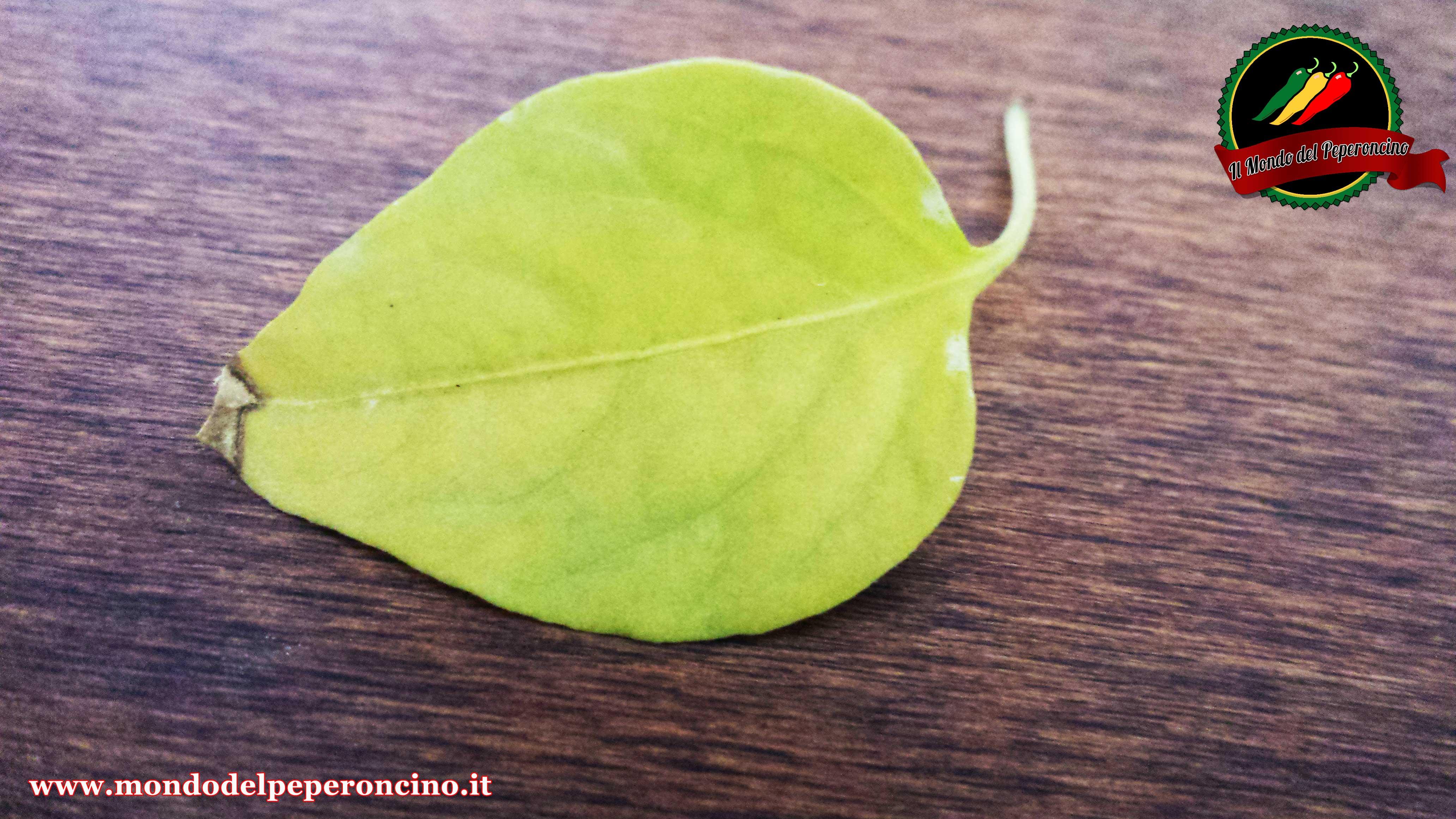 foglie-gialle