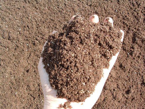 coltivare peperoncino guide terricci