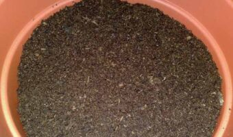 Terriccio da rinvaso per peperoncini