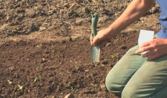 Semina peperoncino: La guida definitiva