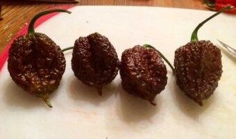 Louisiana Creeper: sarà il nuovo peperoncino più piccante del mondo?