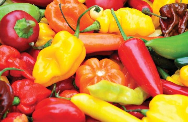 Guida al genere, specie e varietà di peperoncino