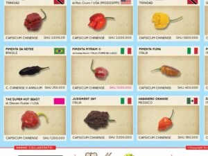 poster peperoncino d'amare