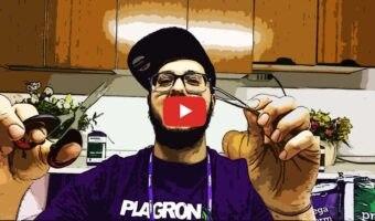 Come liberare i cotiledoni intrappolati nei semi [VIDEO]