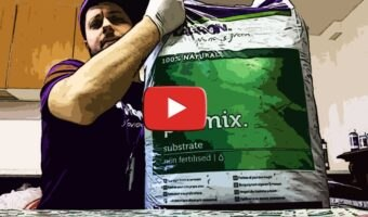 Come e quando spostare i semi di peperoncino dal germbox al vaso [VIDEO]