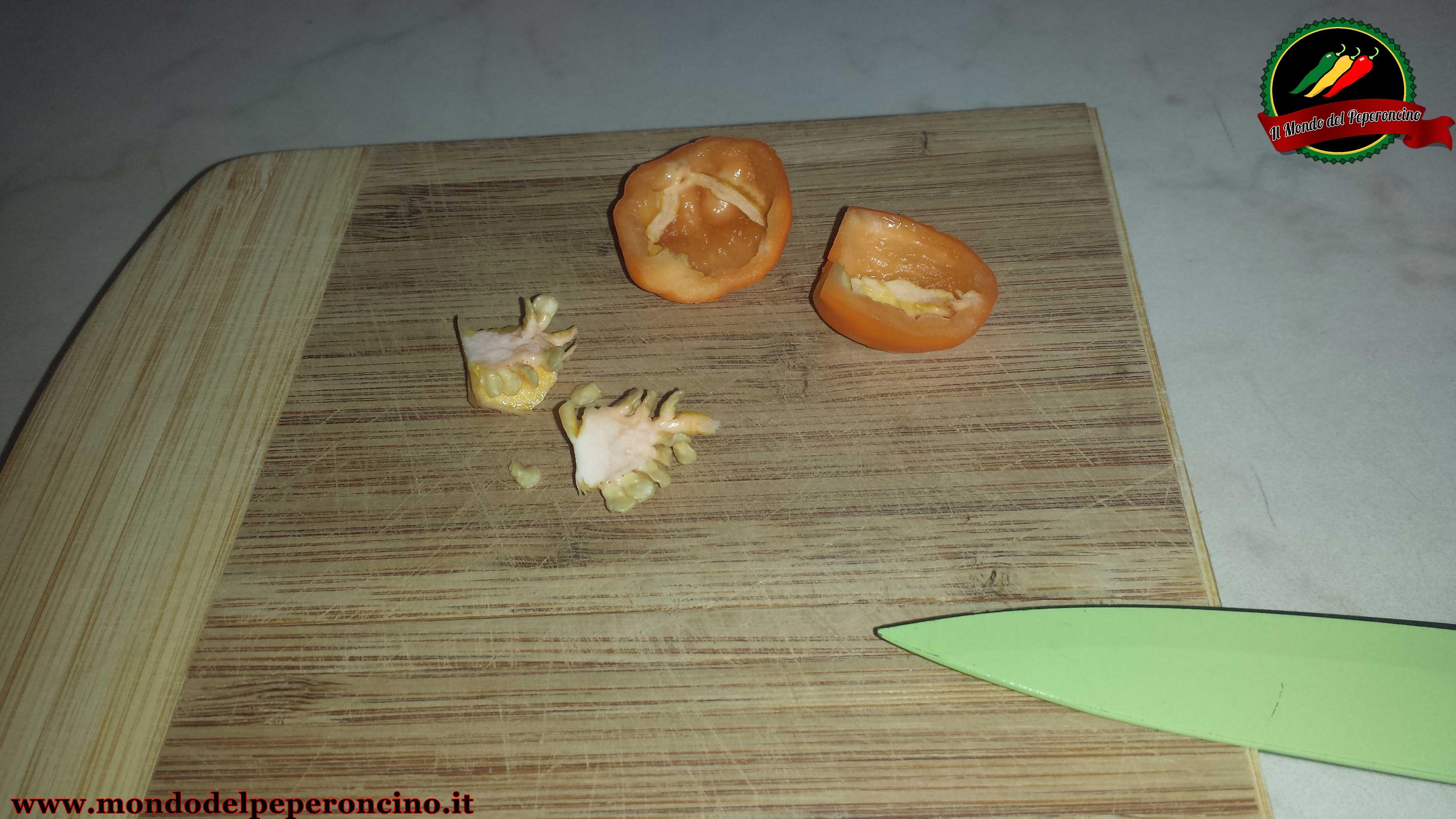 conservare-semi-peperoncino-4