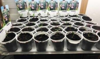 Come scegliere le lampade giuste per la tua grow box – La guida definitiva