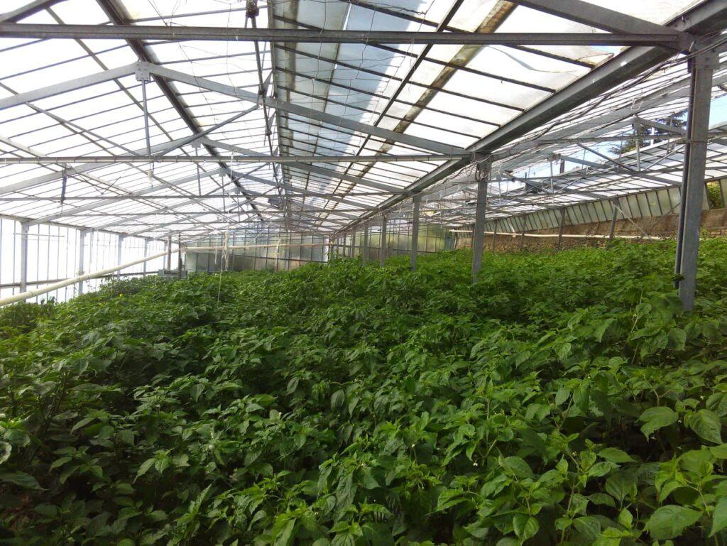 coltivazione filippo argenti