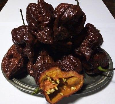 filippo argenti peperoncino