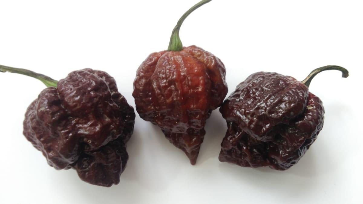 Filippo Argenti: il nuovo peperoncino più piccante del mondo?