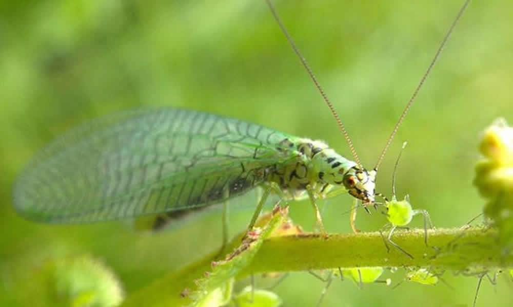 proteggere foglie da insetti