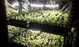 Lampade giuste per la tua grow box: Quali scegliere – La guida definitiva