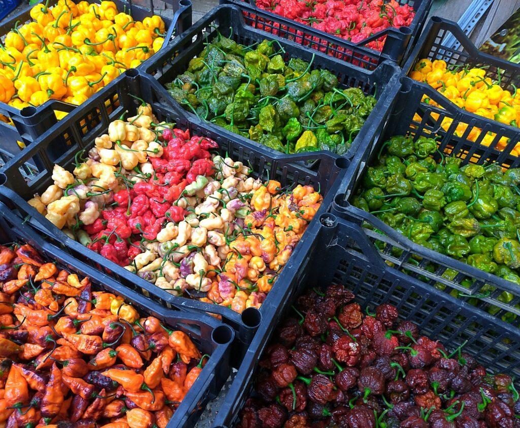 raccolto peperoncini piccanti
