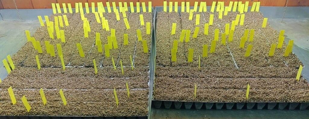 coltivare peperoncini terriccio