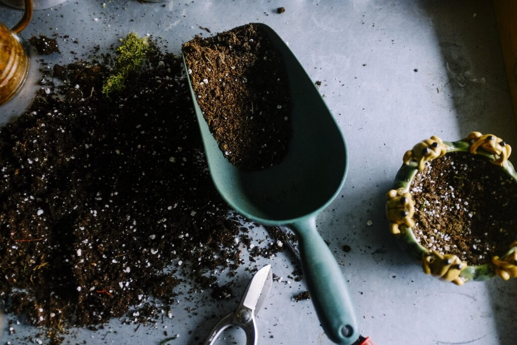 terriccio da semina per peperoncini