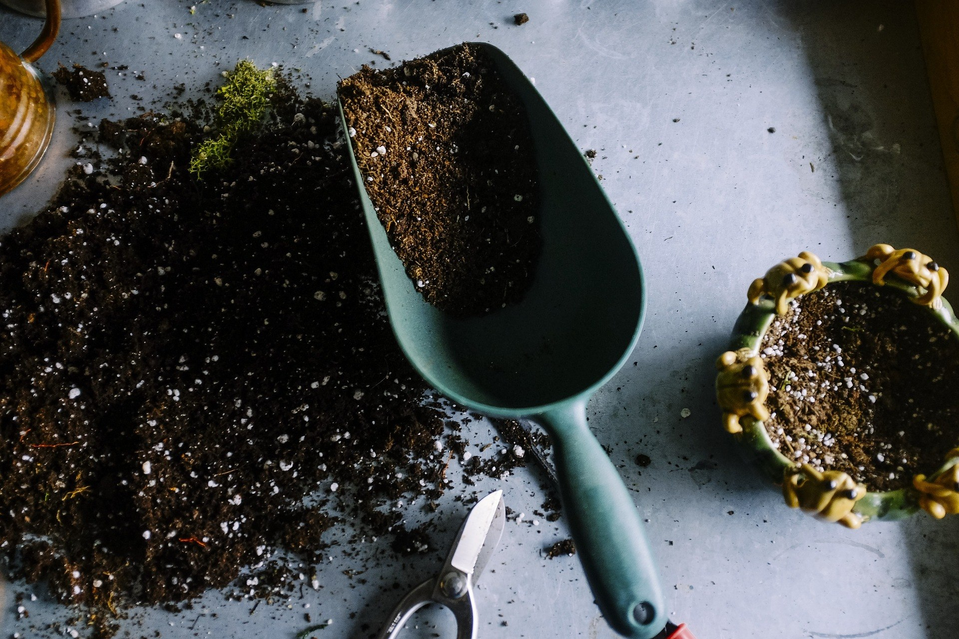 Terriccio da semina per peperoncini: come sceglierlo