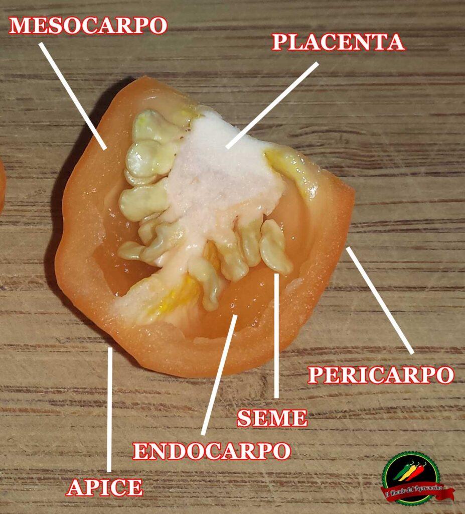 conservare i semi di peperoncino