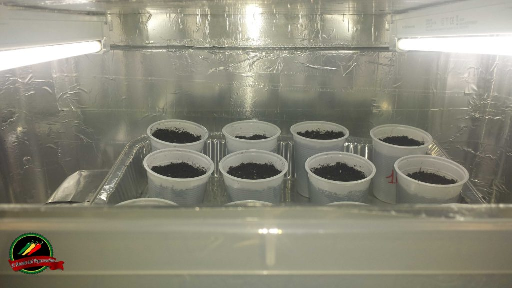 grow box per peperoncini fai da te