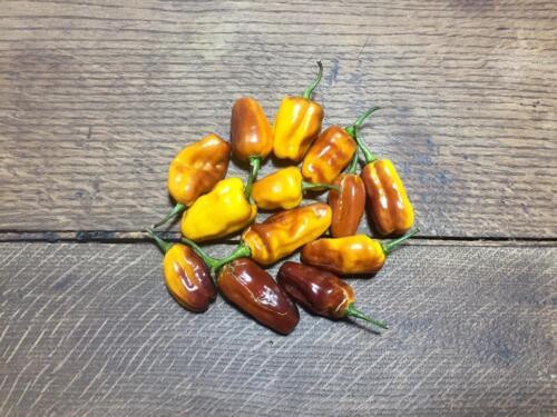 varietà di peperoncino pimenta puma